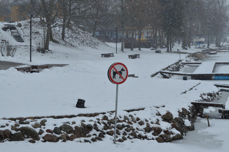 Ženklas draudžiantis eiti šunims