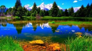 Gamta su prūdu