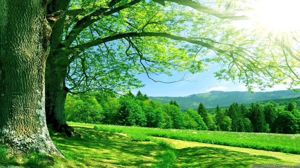 Gamta graži
