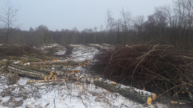 Išpjautas miško plotas