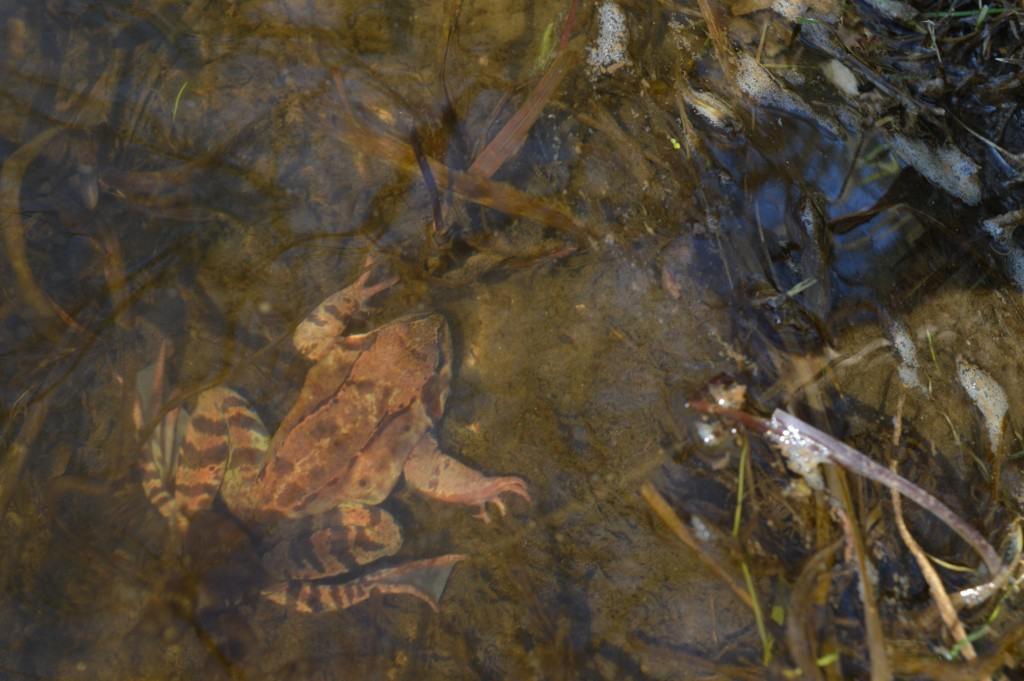 Varlė po vandeniu