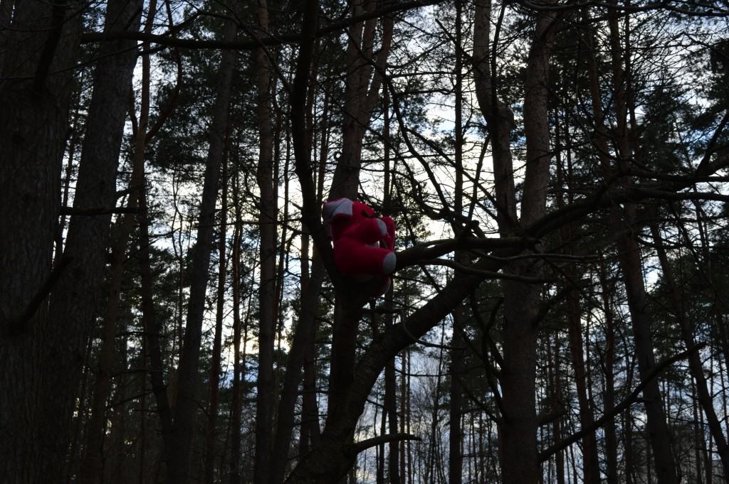 Žaislas medyje