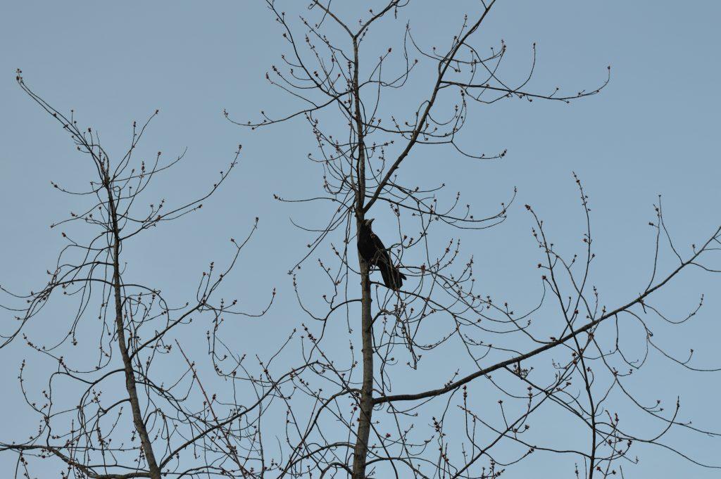 Kranklys medyje