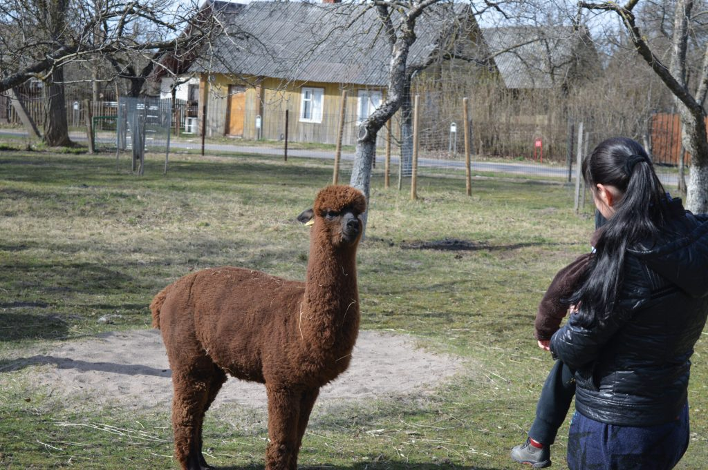 Nemuno Alpakas lanko lankytojai