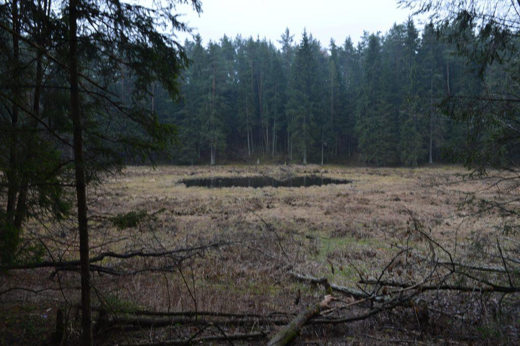 Bala vidurį miško