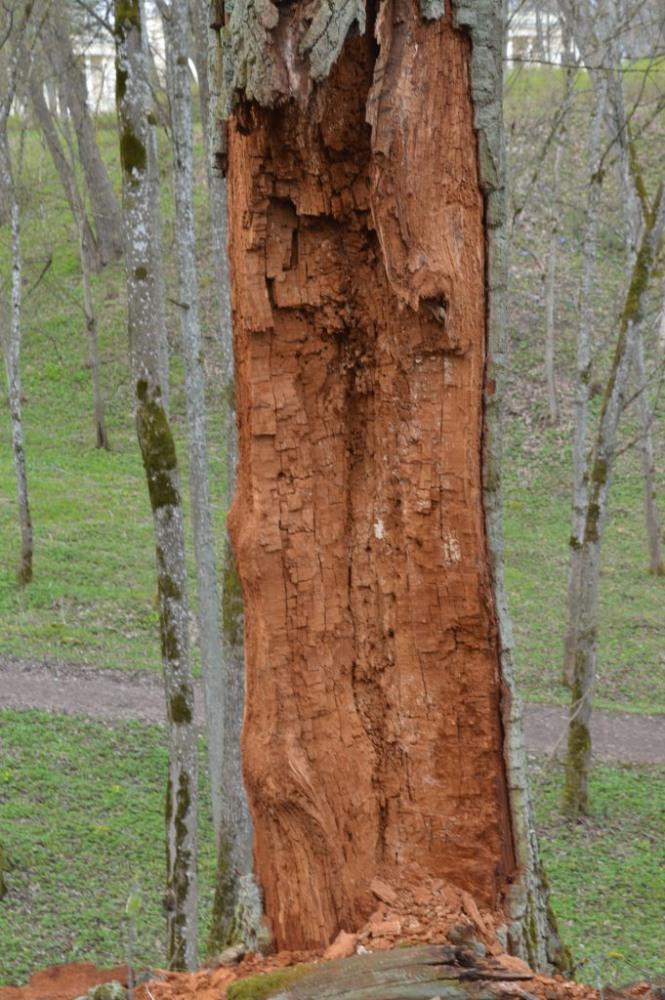 supuves medis