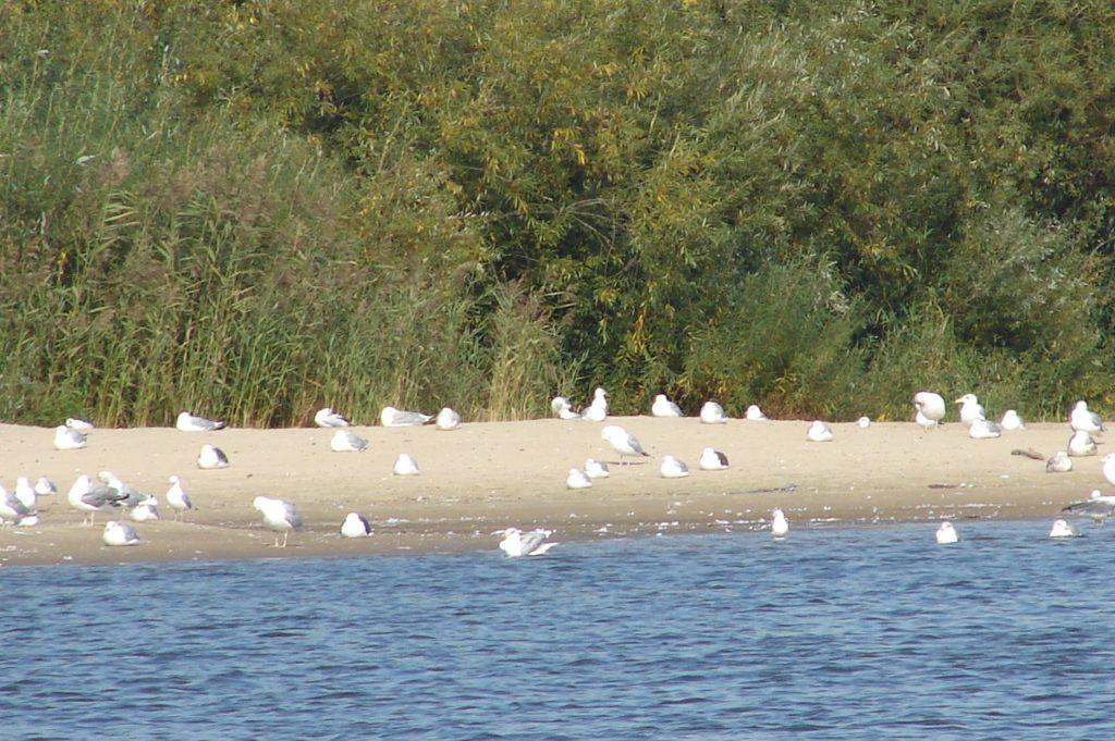 Paukščiai ant kranto