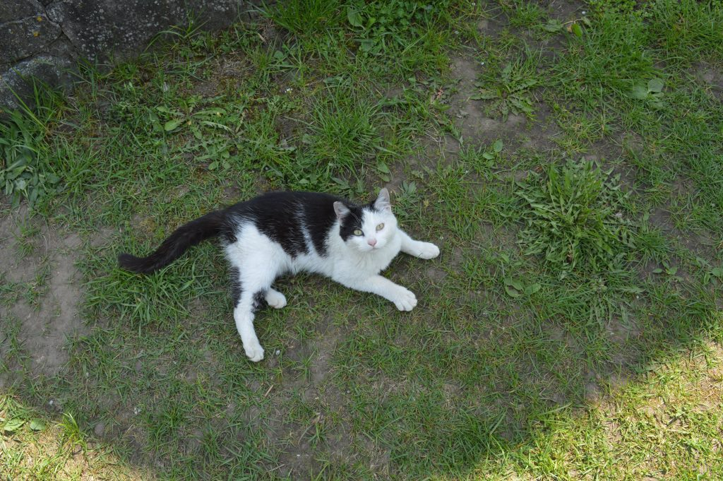 Margas katinas