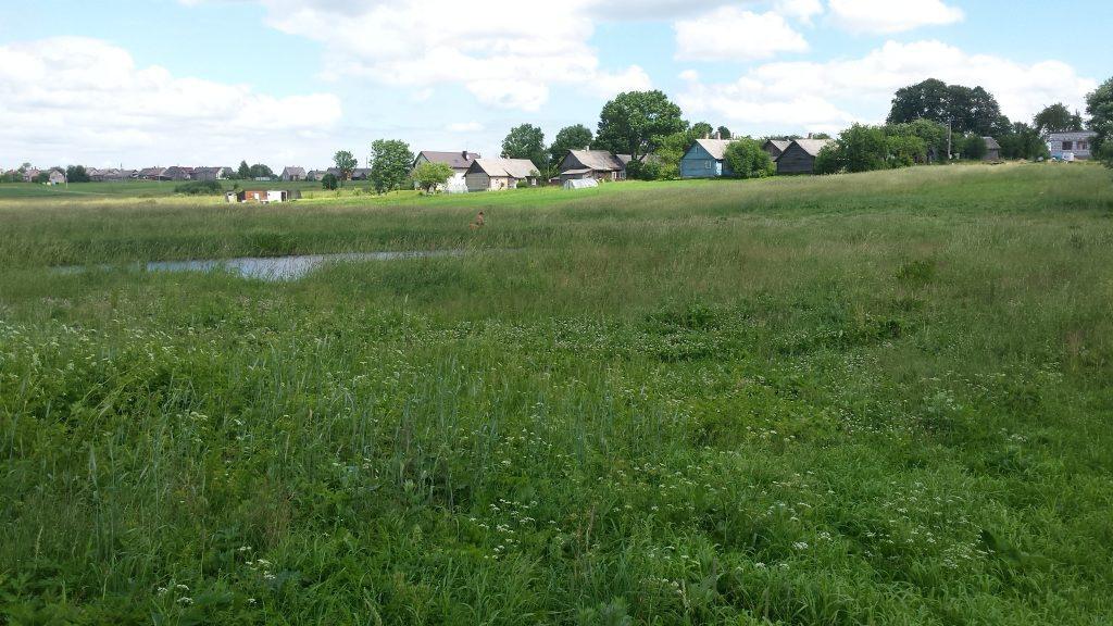 Žolės pjovimas Sauliaus pagalba