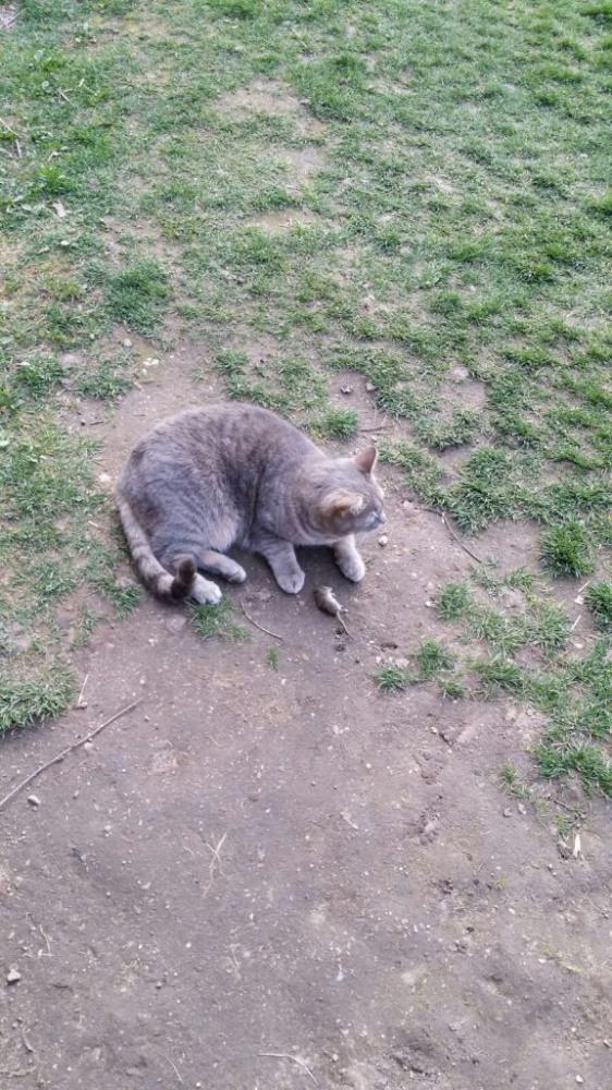 Katinas pagavo pelę