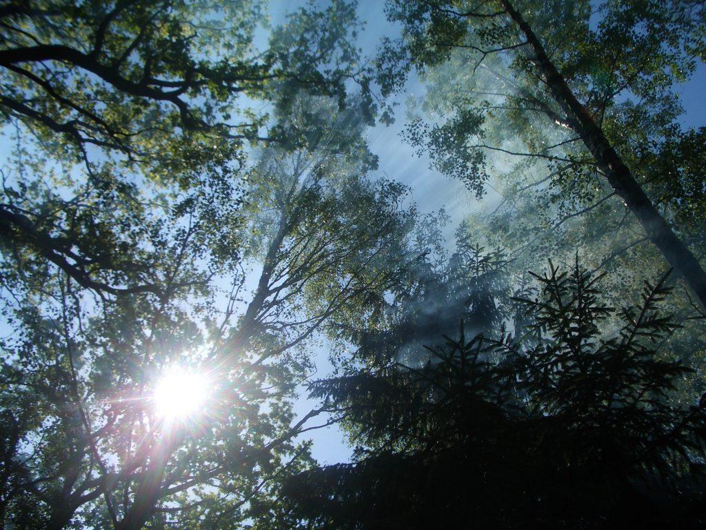Saulės spinduliai pro medžius
