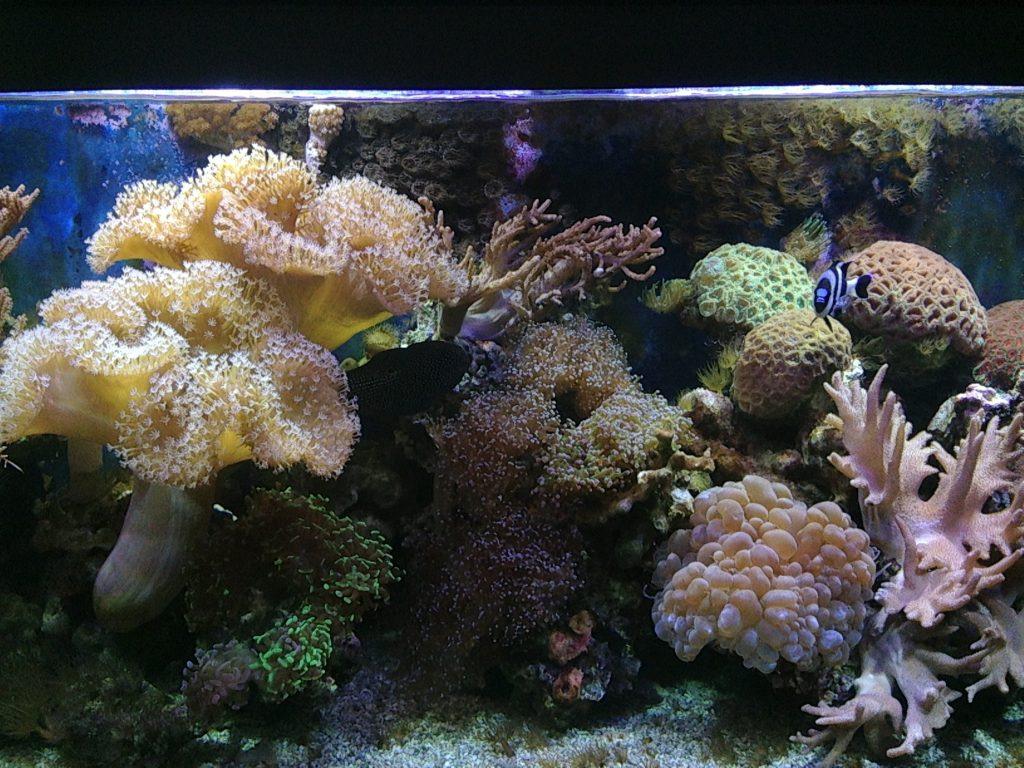 Koralai Jūrų muziejuje
