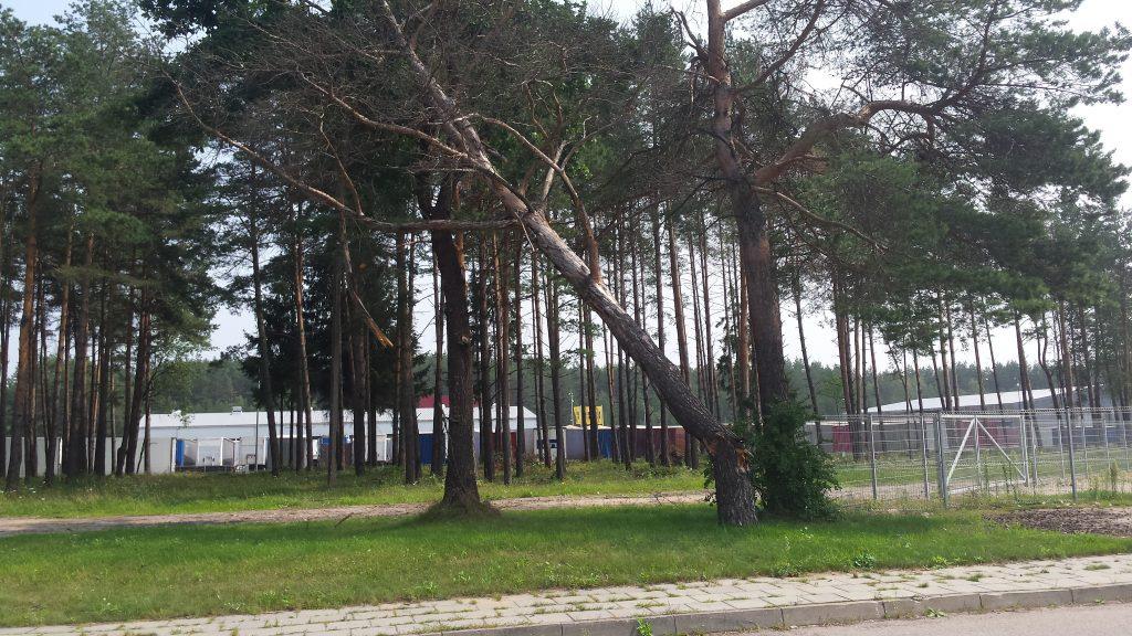 Nulūžęs medis