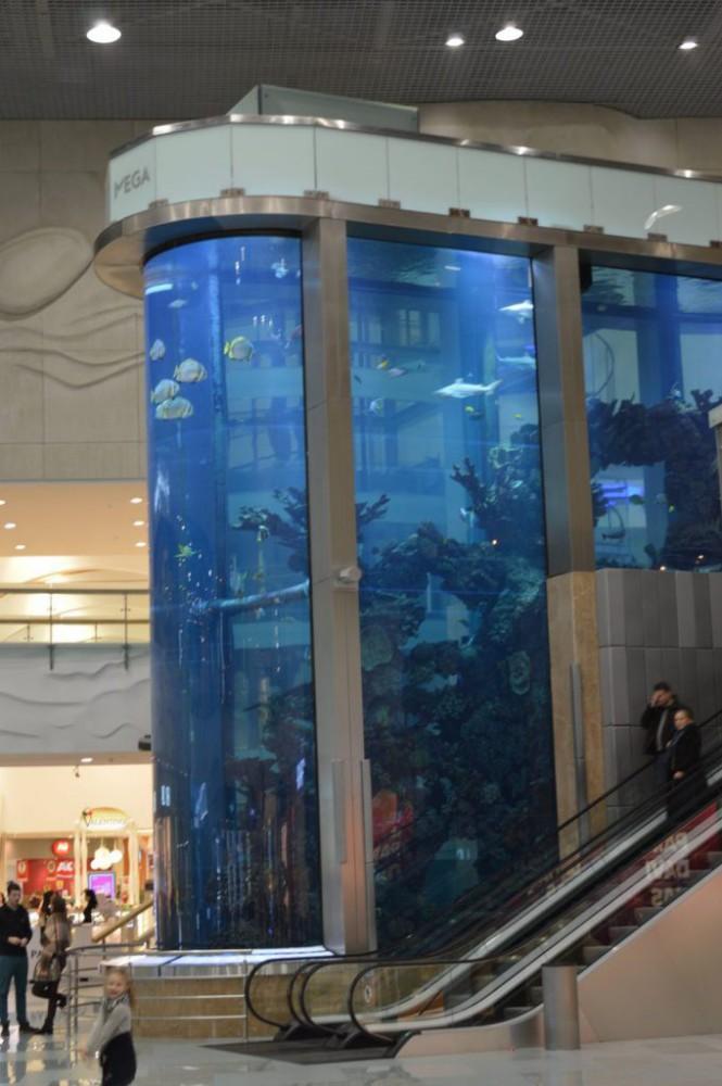 Megos akvariumas