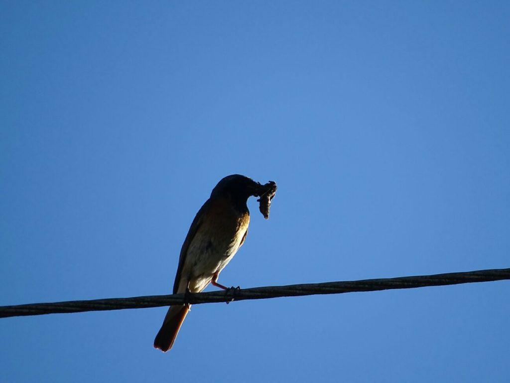 Paukštis pagavo vabalą