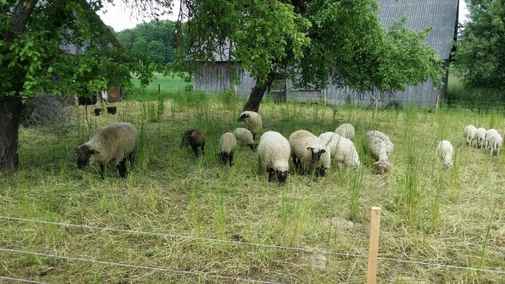 Nemokamas žolės pjovimas