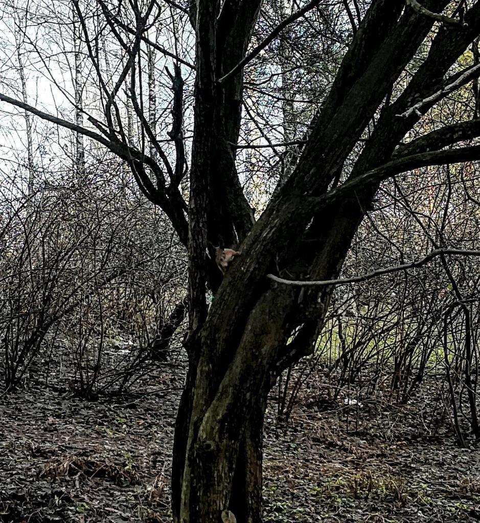 Voverė pasakų parke